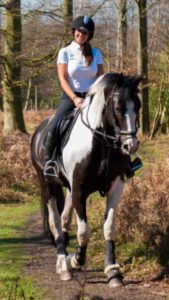dutch warm blood, cannock chase trekking centre
