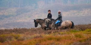 cannock chase trekking centre, nymeria